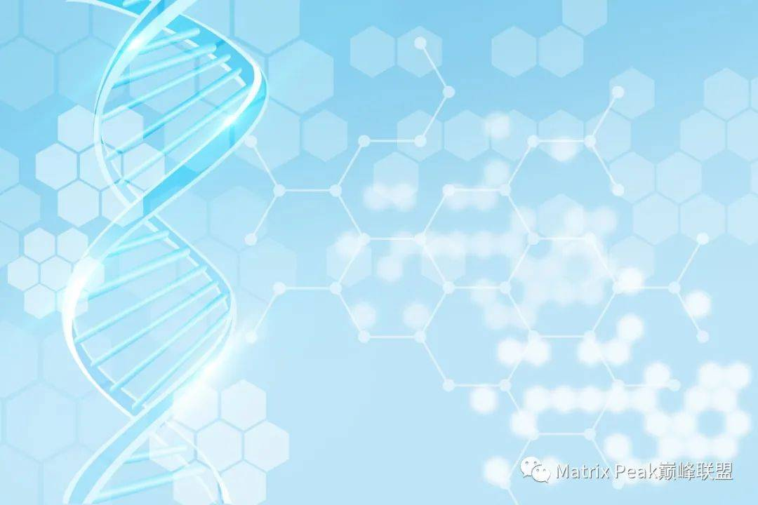 NMN 与长寿蛋白Sirtuin的关系!插图