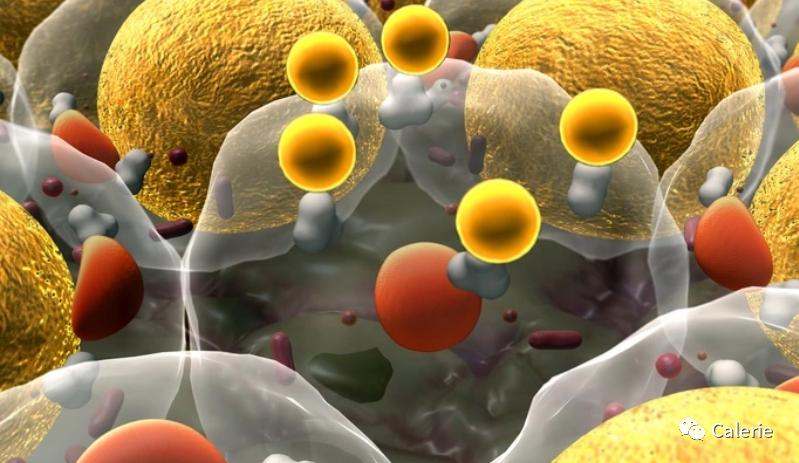 研究表明NMN是一种可对抗肥胖流行病的潜在方法插图